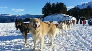 Mushing Andorre