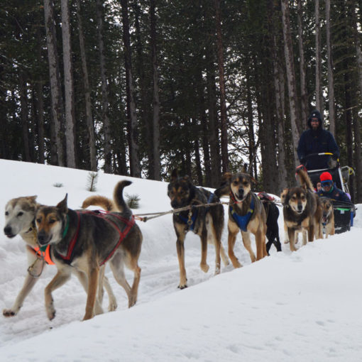 Perros-de-trineo-Andorra